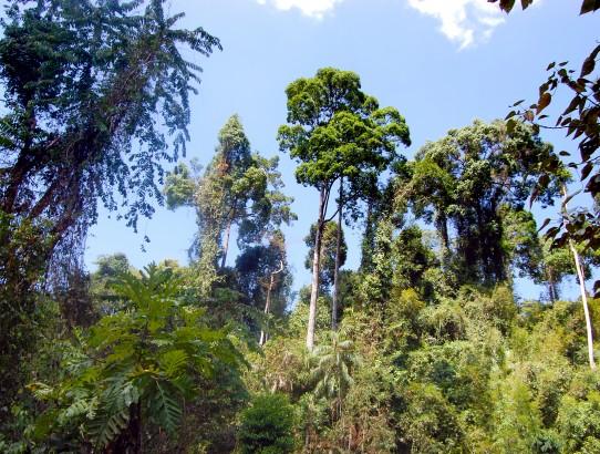Dschungelsafari im Khao Sok Nationalpark
