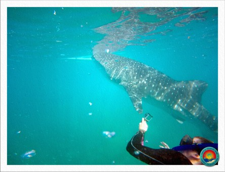 Walhai Begutachtung
