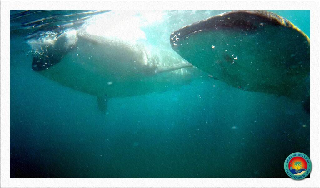 Bitte nicht drängeln... Die Haie haben nur Augen für Ihr Futter