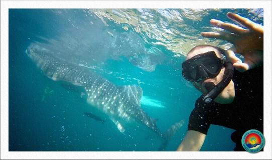 Selfie mit Walhaie vor Oslob