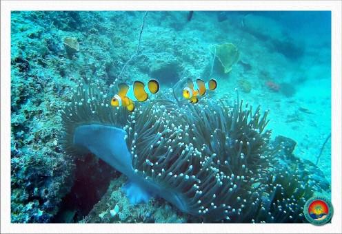 Marlin und Nemo beim Tauchgang bei Koh Waen