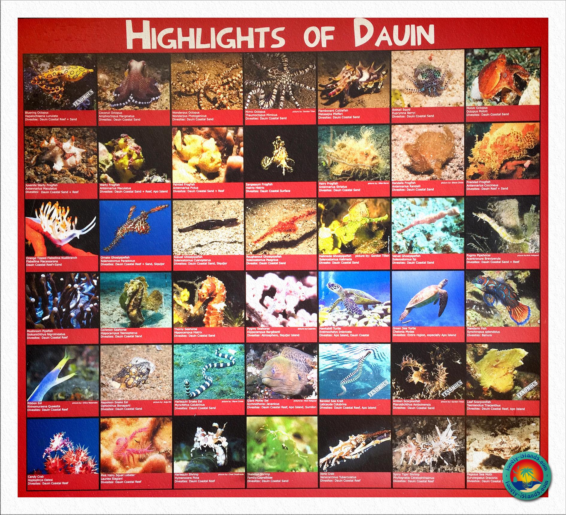 Übersicht der Highlights von Dauin im El Dorado