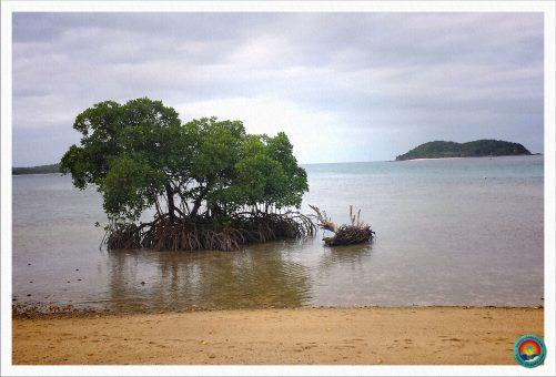 Mangroven vor der Insel