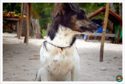 Unser Seehund Berghain